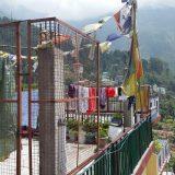 2016-June-Being-Human-at-Dharamsala-India-A-Hungry-Ghost-Retreat-23-Medium